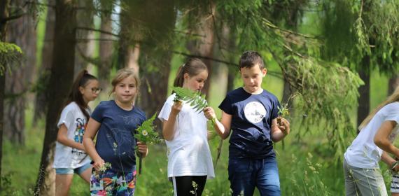 Zariadenie lesnej pedagogiky